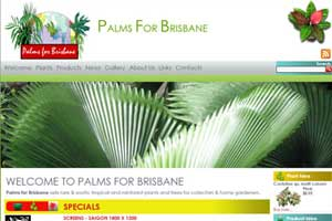 Palms for Brisbane